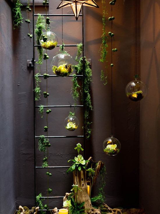 Decorate your home with plants design photos sri lanka for Indoor gardening design