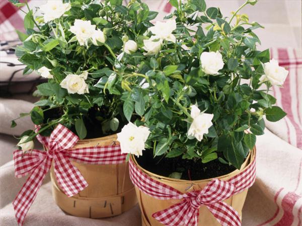 decor-flower-pots